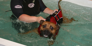 hydrotherapy 150 300